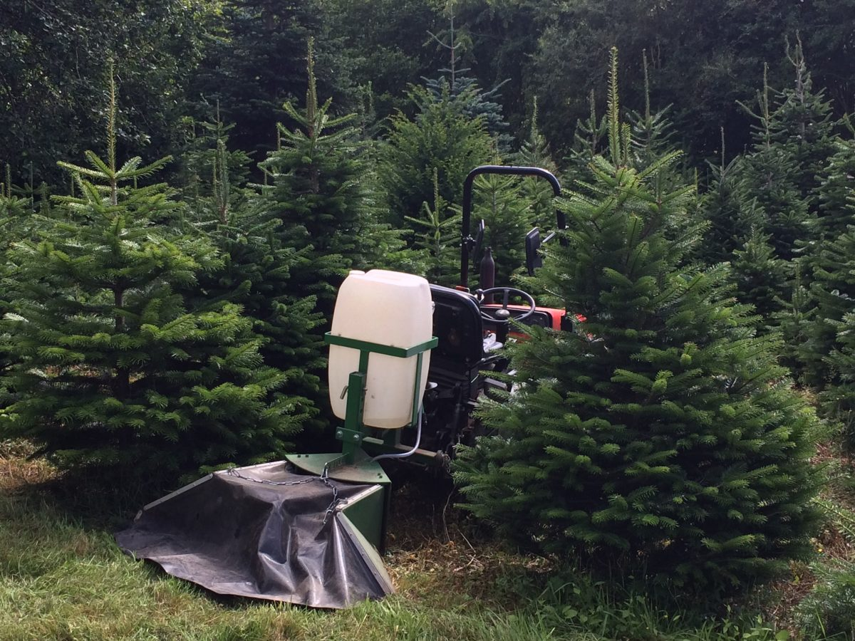 The Lifecycle Of Growing A Christmas Tree Pinewood Christmas Trees